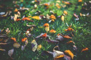 autumn-leaves-classical-guitar